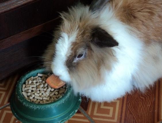 A coelha Belinha é da Yara, de Campinas (SP)