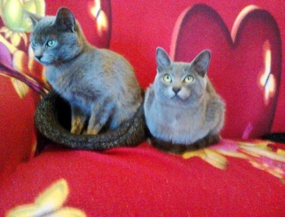 Estes são os irmãos Lyon e Mingau, da Ariane Fracaro Bauditz, Cascavel (PR)