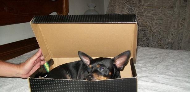 Marrone adora uma caixa como nos contou seu dono Bruno Lopes, de Juiz de Fora (MG)