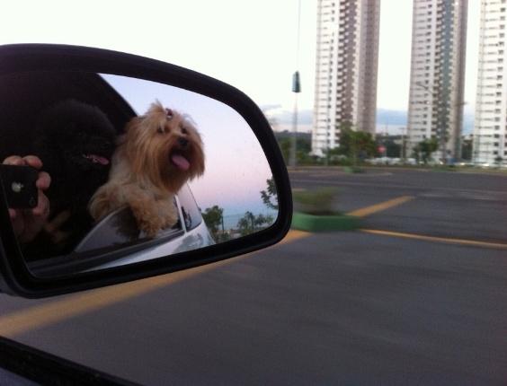 Ozzy e Teelah moram com seus donos Ingrid e Kadu, em Cuiabá (MT)