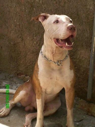 Spyke é o bebê da Soraia. Eles moram em Salvador (BA)
