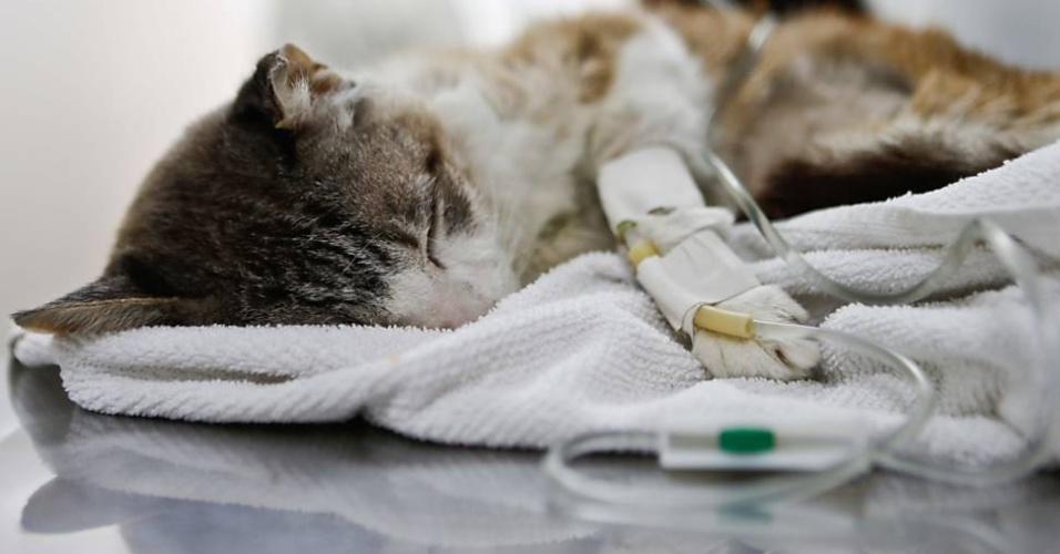 A gata Molenga no primeiro hospital totalmente gratuito para animais na cidade de São Paulo.