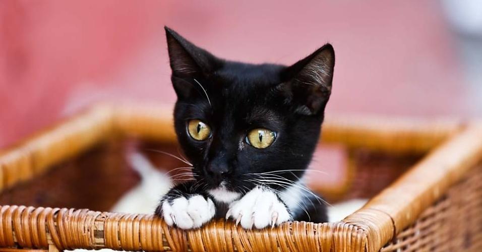 A gata Nina, que quebrou as patas traseiras, aguarda atendimento no hospital gratuito para animais em São Paulo.