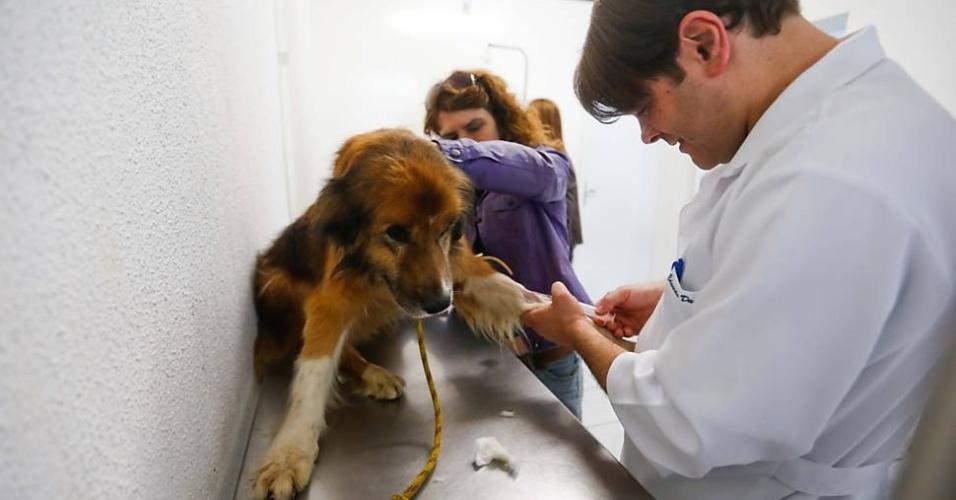 Atendimento no primeiro hospital totalmente gratuito para animais na cidade de São Paulo.