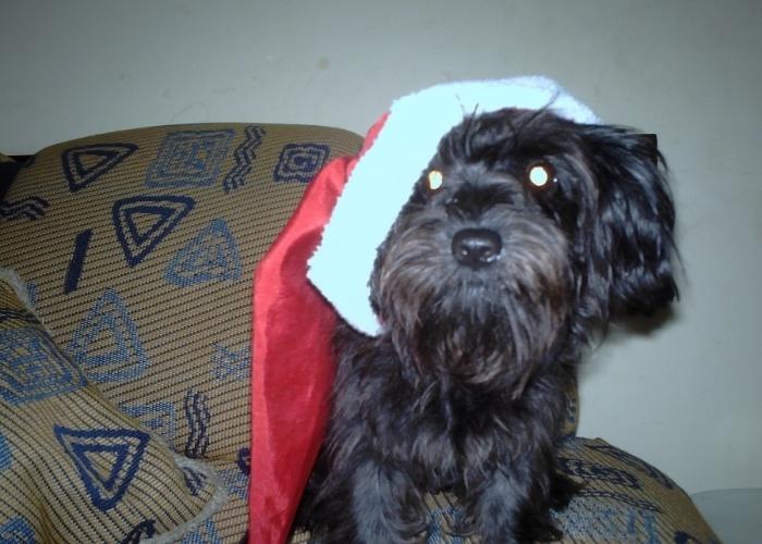 """Lilo é a cadelinha da Ninive, de Salvador (BA). A família escolheu esse nome por conta do desenho da Disney, """"Lilo & Stitch"""""""