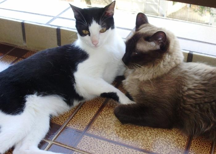 Frederico e Nicolau ambos com quatro anos são a alegria da casa de sua dona Ana Claudia.