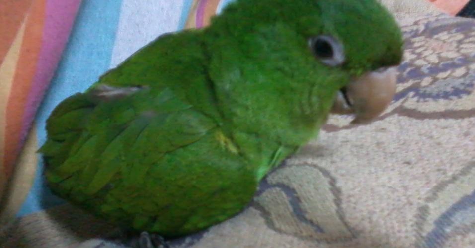Kiko recebeu este nome em homenagem ao Kiko do seriado Chaves. Ele é o bebezinho bagunceiro da Deise, de Ribeirão Preto (SP).