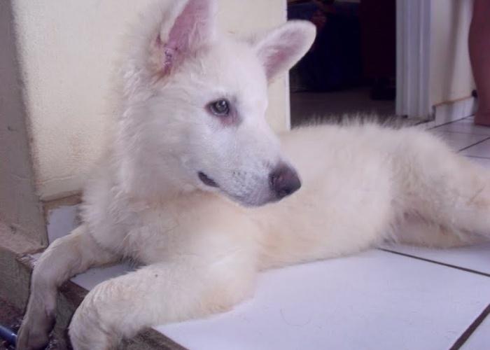 Este é o cãozinho Branco do Hugo Esteves