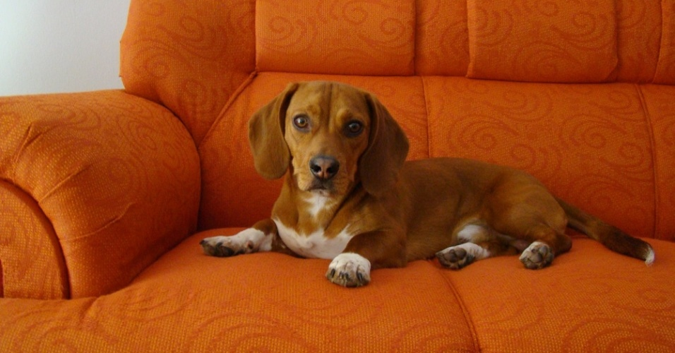 Guri é o cãozinho de estimação da Gissele, de Farroupilha (RS).
