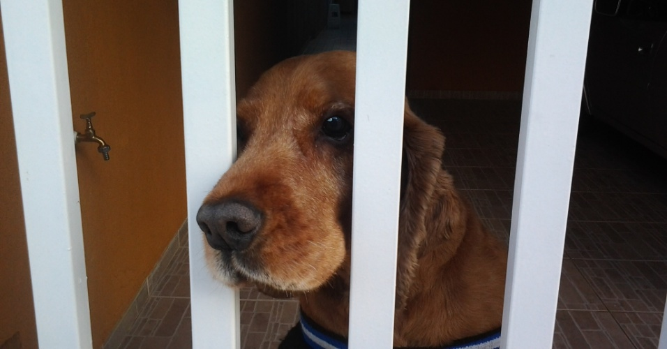 Bethoveen fica uma fera quando vê uma máquina fotográfica. Ele é o cachorro da Betinha, de Guarulhos (SP).