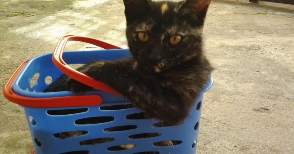 Esta é Florzinha, a gatinha de cinco meses do Anderson Brandão.