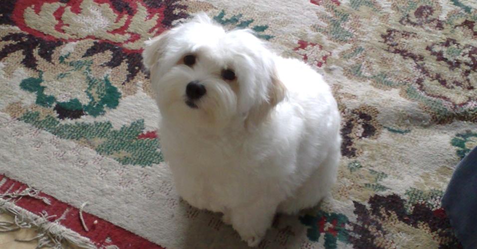 Fika, uma maltês de quatro anos, é super carinhosa. Ela é a cachorrinha da Cyntia, de São Paulo (SP).