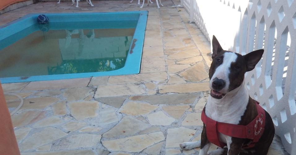 Meg, uma Bull Terrier, é a xodó da casa da Jéssica e do Bruno de Oliveira, de São Sebastião (SP). Meg dorme o dia inteiro e adora passear.