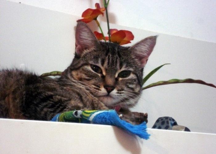 Neggy é uma gata da raça maine coon. Tany Cruz D'Aniello é sua dona e conta que Neggy é fofa e charmosa.