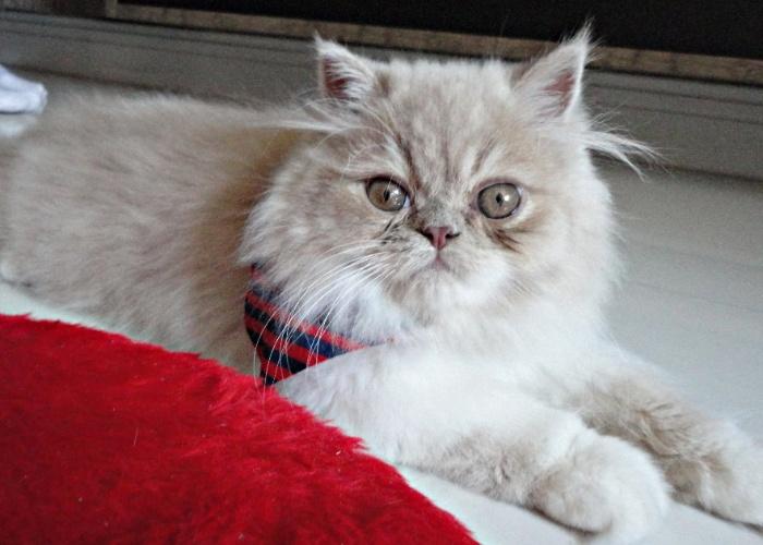Riquinho, de sete meses, é o filhote da Geisa, de Vitória (ES). Ele é muito carinhoso e adora colo.