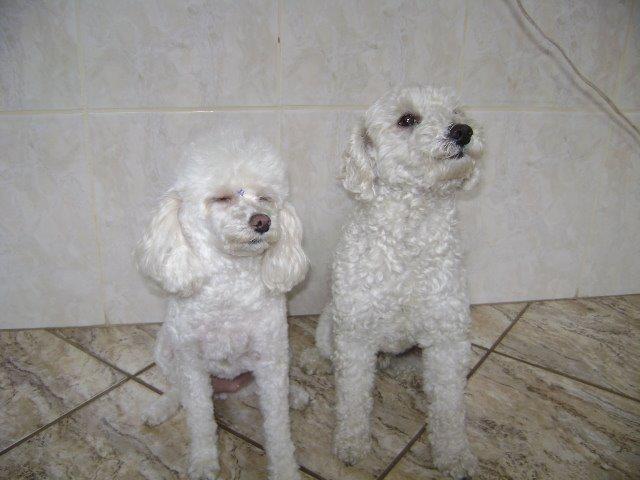 Mel e Pingo são os grandes amores de sua dona Ágata; eles moram em Araraquara (SP)