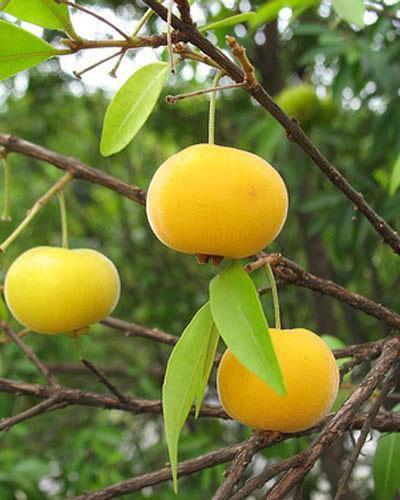 Frutas exóticas - BOL Fotos