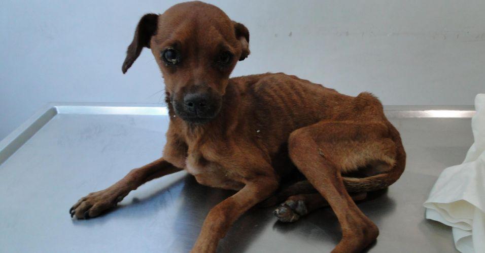 Segunda-feira (23/1) - Um grupo de defensores dos animais resgatou um cachorro que estava preso em um buraco na parede que há entre uma banca de jornal e o chão, em Osasco (Grande São Paulo). O resgate durou cerca de 20 minutos. De acordo com Rafael Ernandi, jornalista que ajudou a salvar o cão quebrando a parede com um martelo, o animal estava muito delibitado e com medo. O cachorro, que recebeu o nome de Costelinha, foi levado para o veterinário.