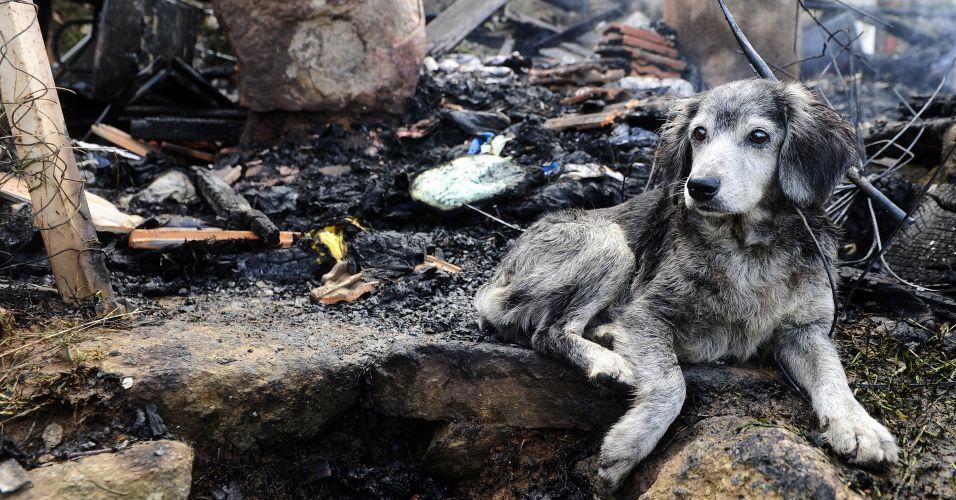 Quinta-feira (26/1) - Incêndio destrói casa de madeira, em Florianópolis (SC). No interior do imóvel havia duas crianças que foram retiradas sem ferimentos. Três caminhões do Corpo de Bombeiros foram usados para atender a ocorrência