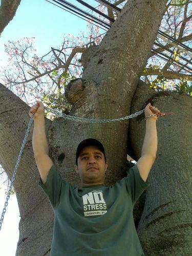 Segunda-feira (5/3) - Um empresário de Curitiba (PR) se acorrentou a uma árvore para impedir que ela seja cortada. Carlos Eduardo Andersen, 37, quer poupar a paineira-rosa com cerca de 70 anos de idade e pelo menos cinco metros de altura.