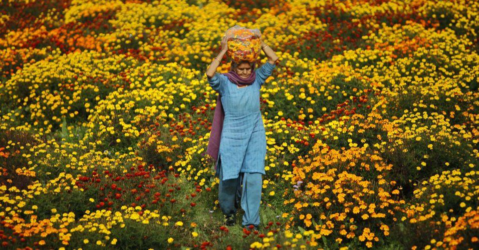 Flores na Índia