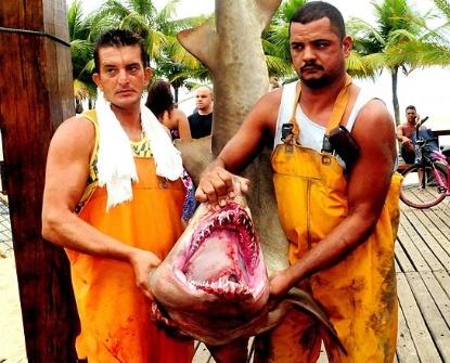 Quinta-feira (22/3) - Quatro tubarões foram encontrados no litoral sul paulista, três deles nas águas da cidade de Praia Grande e um em Mongaguá, cidade vizinha, informou a Guarda Costeira de Praia Grande.