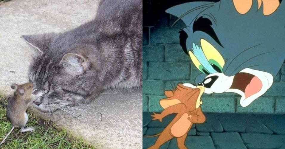 A inglesa Stephanie Evans, 41, lembrou da dupla do desenho animado 'Tom e Jerry' ao presenciar uma cena digna do desenho animado, protagonizada por seu gato e um rato no jardim de sua casa (15/3/12).