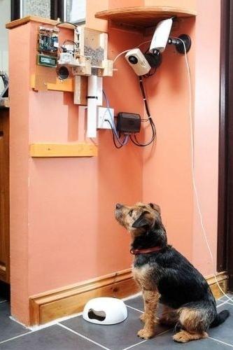 Como passa muito tempo fora de casa e nem sempre consegue alimentar seu cãozinho Toby, o inglês Nat Morris, 30, criou um sistema eletrônico para alimentar o border terrier de qualquer parte do mundo. (7/3/12)