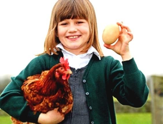Uma galinha surpreendeu seus donos por botar um ovo quase três vezes maior que o tamanho normal (13/3/12)
