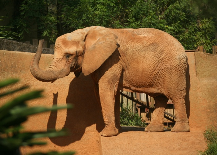 A elefante africana Teresita é considerada um dos animais mais divertidos do zoológico. Ela adora fazer poses para fotografias, o que acabou a transformando em uma das atrações mais disputadas do público.