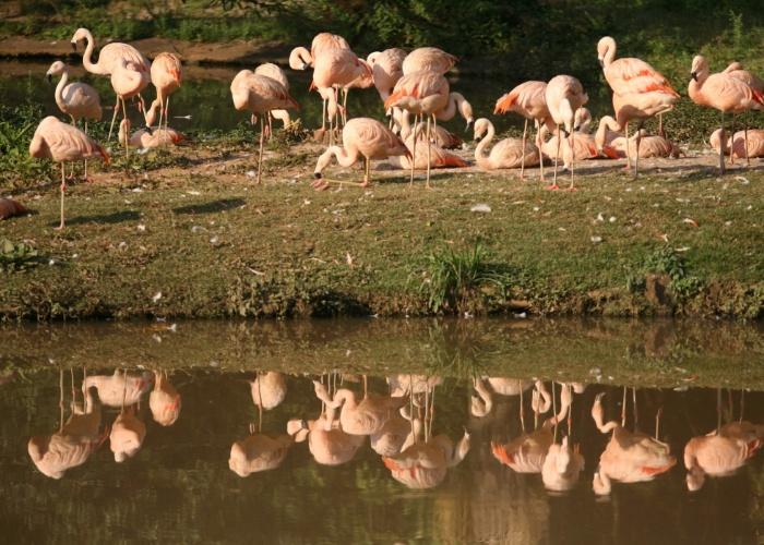 A reportagem do BOL preparou um passeio pelo zoo de São Paulo e convida você internauta para conhecer algumas das espécies que habitam o parque. Confira fotos de ursos, girafas, camelo, hipopótamo, macacos e outros bichos que fazem parte do grupo de animais de um dos maiores zoológicos da América Latina.