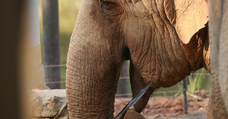 As elefantas asiáticas Hangun e Serva viviam em péssimas condições dentro de um espaço de 50 metros na cidade de Salete, interior de Santa Catarina. Elas ganharam uma jaula adequada em São Paulo após uma ação para trazê-las ao zoo, que aconteceu por meio do programa da rede Globo ?Caldeirão do Huck'.