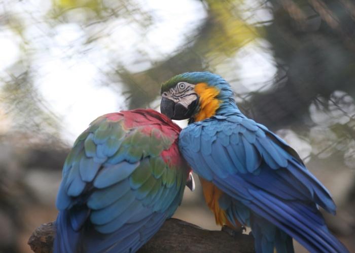 Entre o acervo do zoológico destaca-se a gaiola das araras, uma jaula bem ampla com diversas espécies da ave tropical. No local é possível identificar araras-vermelha, o tipo mais conhecido o público, araras-azul, que como o nome entrega possui o corpo todo em tom azulado, e a arara-canindé, com penas amarelas e azuis.