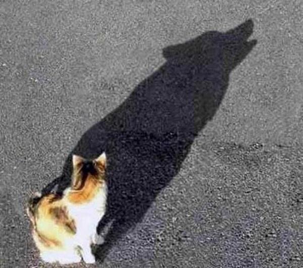 Espírito canino em corpo felino