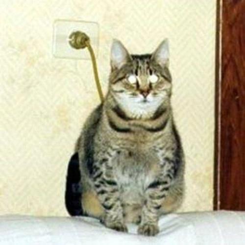 Sabe por que os gatos têm sete vidas? Eles recarregam a energia
