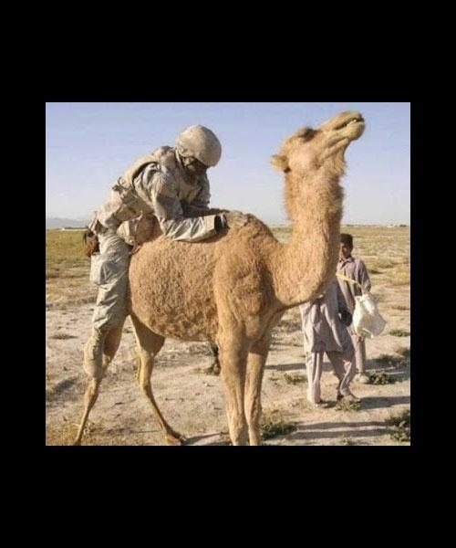 Tem gente que gosta de camelar