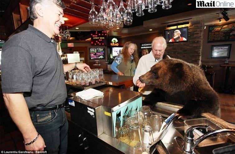 O casal canadense Mark e Daw Dumas resolveram deixar a tradição de lado e inovaram ao adotar como 'mascote da família' um urso gigante, que recebeu o nome de Billy. O urso pardo de estimação pesa 115 kg e tem 2 metros de altura. O animal leva uma vida de 'pet', brincando livremente pela casa dos donos.