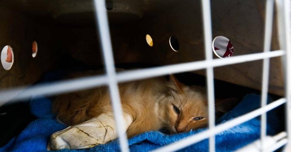 A gata Adele, que foi atropelada, espera atendimento no hospital público veterinário de SP.