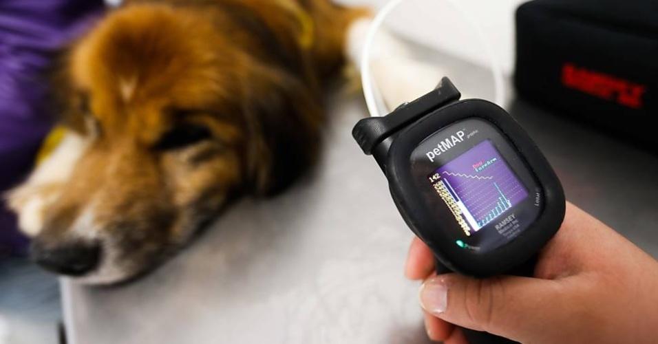 Cachorro mede pressão no primeiro hospital totalmente gratuito para animais de São Paulo.