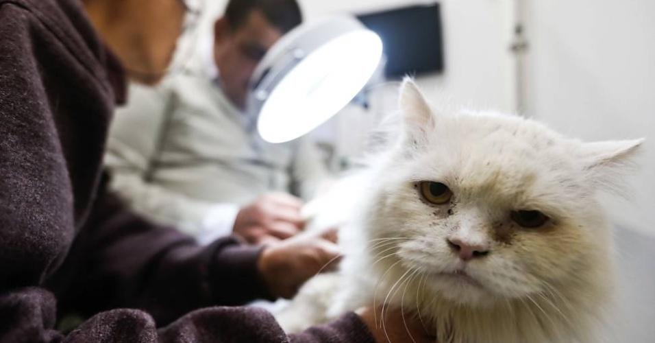 Gato é examinado no primeiro hospital totalmente gratuito para animais de São Paulo.