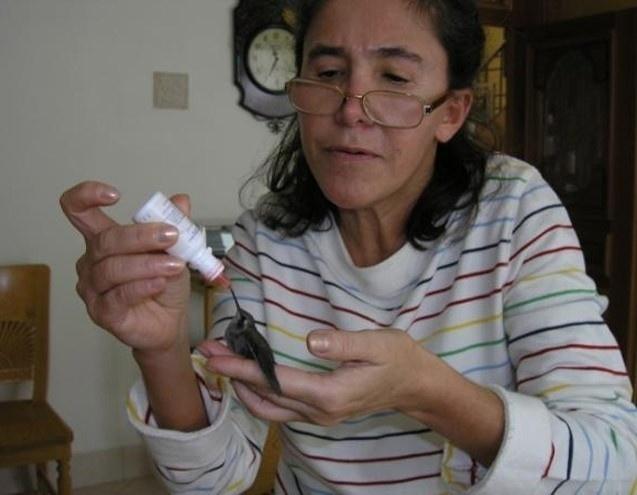 """Roberto Bolaños gosta de postar imagens pessoais no Twitter para agradar aos fãs. Nesta foto, podemos ver Florinda Meza, esposa dela e intérprete da Dona Florinda, alimentando um pequeno beija-flor. Ele mesmo postou a explicação da foto, """"Insólito! Florinda criou um beija-flor que caiu do ninho. Aqui vocês o veem quase adulto. Como os filhos, um dia saiu voando""""."""