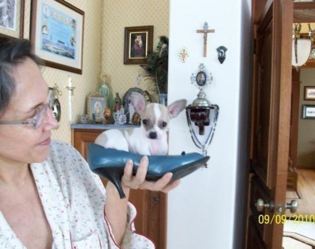 Roberto Bolaños gosta de postar imagens pessoais no Twitter para agradar aos fãs. Nesta foto, podemos ver Florinda Meza, esposa dele e intérprete da Dona Florinda, brincando com o filhotinho Pancho, um de seus bichinhos de estimação.