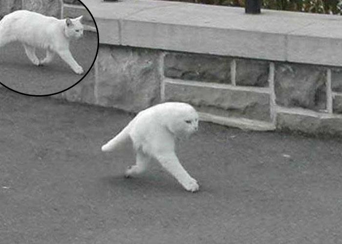 9.mai.2013 - O sistema de monitoramento fotográfico do Google, o Street View, captou uma imagem curiosa: um gato branco, flagrado caminhando na rua, apareceu sem as orelhas e com apenas duas patas. A imagem, fruto de um erro no sistema do Street View, está fazendo o maior sucesso entre os internautas