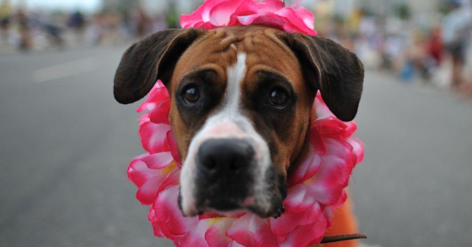 Segunda-feira (20/2) - Cachorros fantasiados participam do ''Blocão'', na orla de Copacabana, no Rio de Janeiro